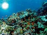 ホテルマハイナウェルネスリゾートオキナワ 大人気の沖縄美ら海水族館